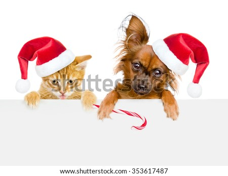 Cat and dog in red santa hats with Christmas candy cane looking out because of the poster. isolated on white background. - stock photo