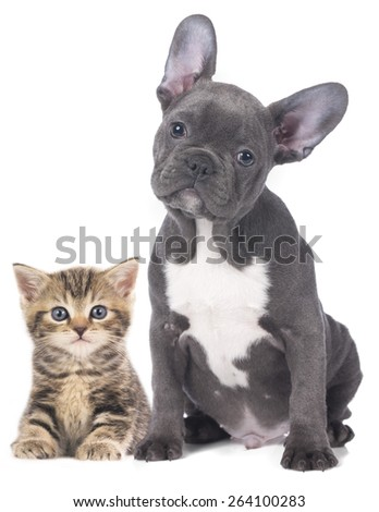 Cat and dog isolated - stock photo
