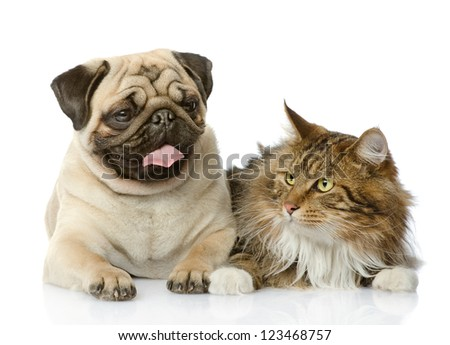 cat and dog.  isolated on white background - stock photo