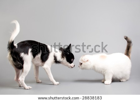 cat and dog looking at each other - stock photo