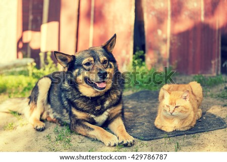 cat and dog lying together in the yard - stock photo