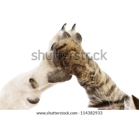 cat and dog making hi-five gesture. isolated on white background - stock photo