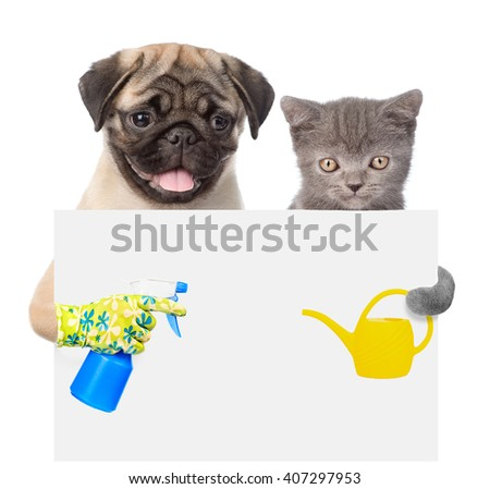 Cat and Dog peeking from behind empty board and looking at camera. isolated on white - stock photo