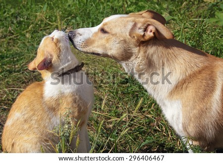Cat and dog playing together on a sunny meadow - stock photo
