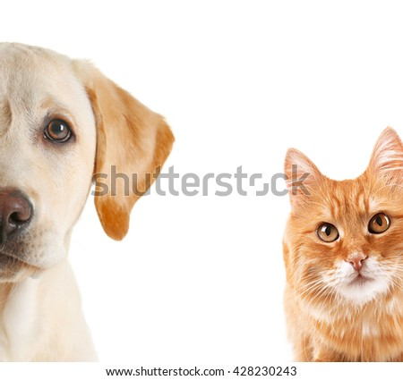 Cat and dog portraits, isolated on white - stock photo