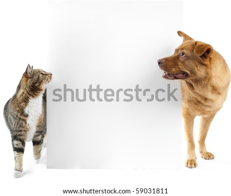 Cat and dog side to side looking at banner - stock photo