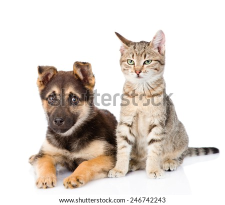 cat and dog sitting together. isolated on white background - stock photo