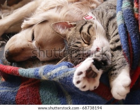 Cat and dog sleeping together - stock photo