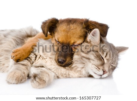 cat and dog sleeping together. isolated on white background - stock photo