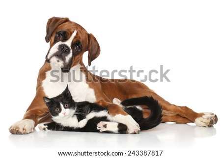 Cat and dog together lying on the floor - stock photo