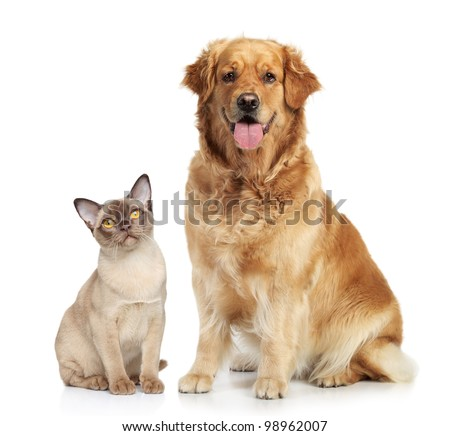Cat and dog together on a white background - stock photo