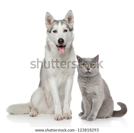 Cat and dog together posing on a white background - stock photo