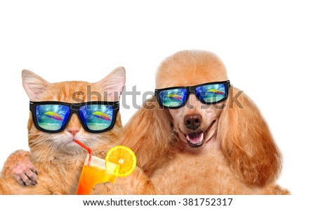 Cat and dog wearing sunglasses relaxing in the sea background. Isolated on white. - stock photo