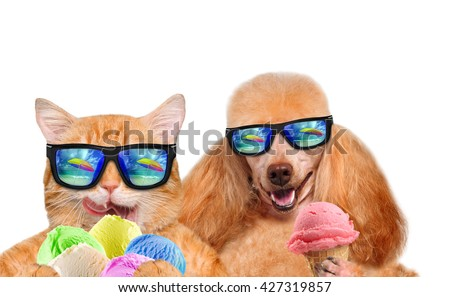 Cat and dog wearing sunglasses relaxing in the sea background. Red cat and dog eats ice cream. Isolated on white. - stock photo