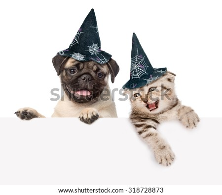 Cat and dog with hats for halloween looking out because of the poster. isolated on white background - stock photo