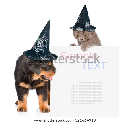 Cat and Dog with hats for halloween peeking from behind empty board. isolated on white background - stock photo