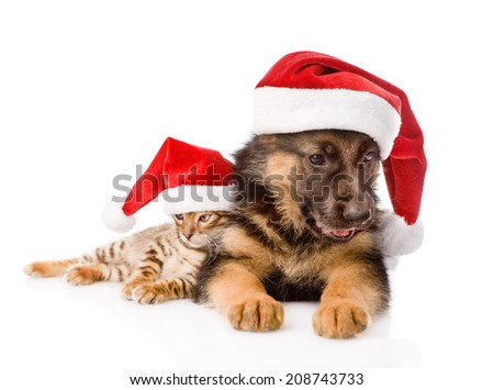 cat and dog with red hat. focus on cat.  isolated on white background - stock photo