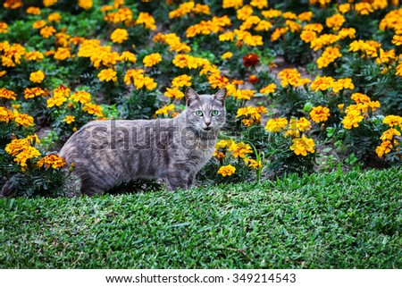 cat and flower bed summer day - stock photo