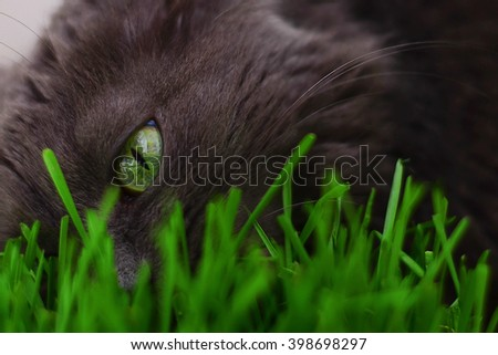 cat and grass - stock photo