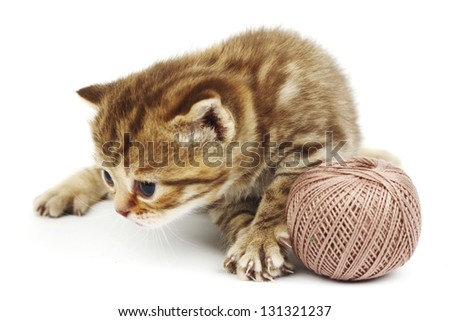cat and gray wool ball isolated on white - stock photo