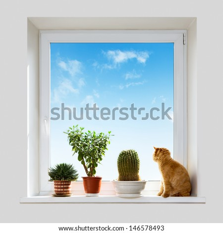 Cat and house plants on the windowsill. Spring. - stock photo