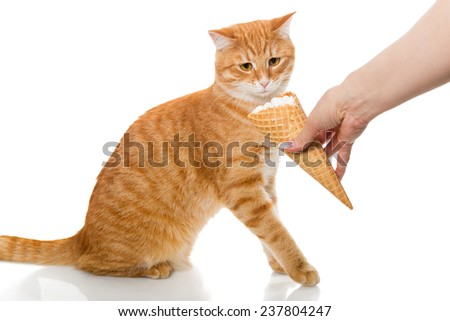 Cat and ice cream, isolated on white background - stock photo