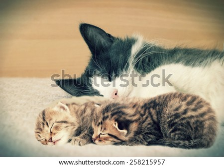cat and kittens - stock photo