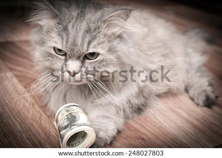 cat and money - stock photo