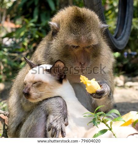 Cat and monkey - stock photo