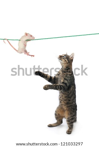 cat and mouse on a white background - stock photo