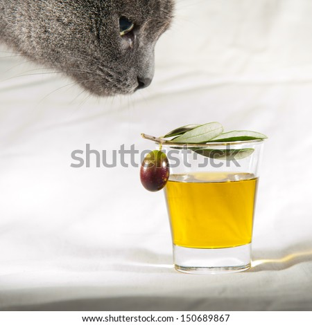 Cat and olive oil - stock photo