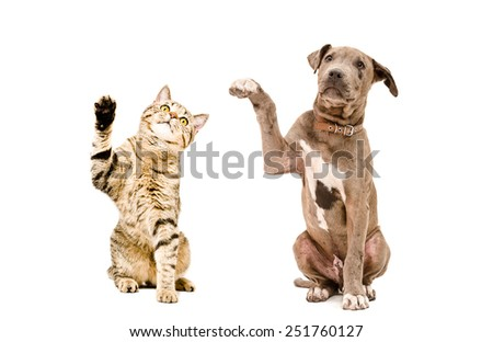 Cat  and  puppy sitting together with raised paws isolated on white background - stock photo