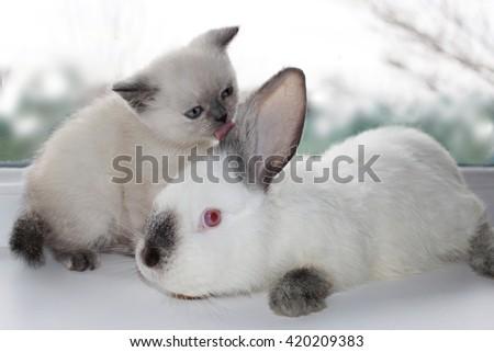 cat and rabbit - stock photo