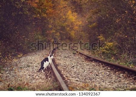 Cat and Railway in autumnal forest - stock photo
