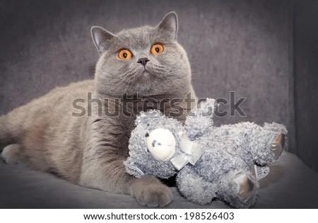 Cat and teddy bear - stock photo