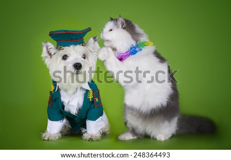 cat apologizes to police dogs - stock photo