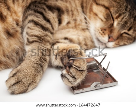 Cat asleep after playing with mousetrap. - stock photo