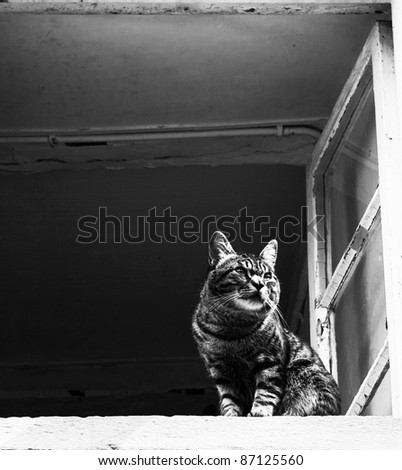 Cat at a window - stock photo