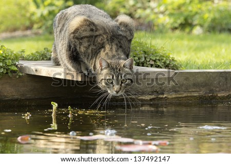 Cat at pond edge - stock photo