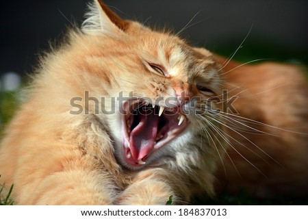 cat attacking  - stock photo