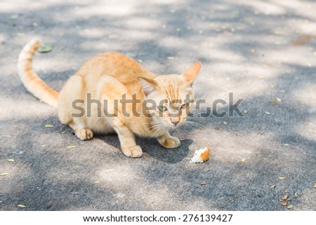 cat bites a piece of bread on cement floor - stock photo