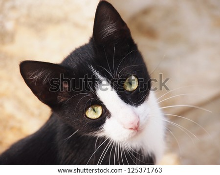 cat, black and white,  close-up, - stock photo