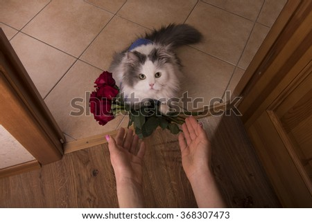 cat brought roses as a gift to his mom - stock photo