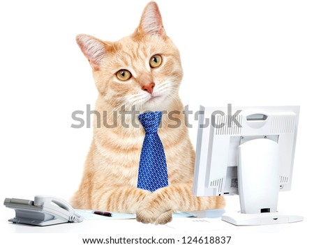 Cat businessman in the office with computer and a telephone. - stock photo