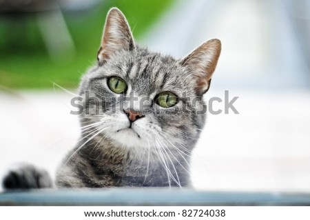 Cat by a window - stock photo