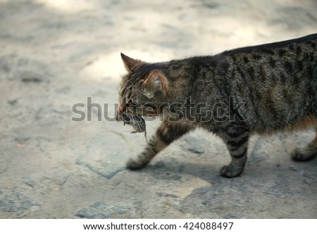 cat carrying a mouse - stock photo