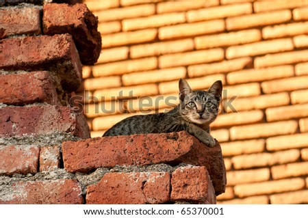 CAT Cat looking something in the sky in Thailand Temple - stock photo