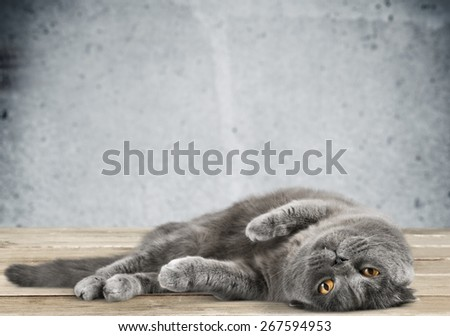 Cat. Cat Named Hector - stock photo