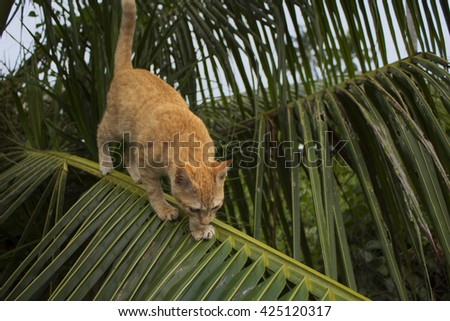 Cat climbing on palm tree. Cute kitty on branch. Cute cat, cat in the garden, red cat, small cat on branch, baby cat in village, beautiful cat, lovely cat, cat picture, pet red cat, cat is on branch - stock photo