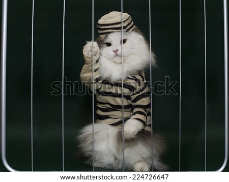 cat criminal behind bars - stock photo